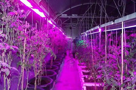Фитолампы светодиодные лампы для растений - особенности выбора и применение