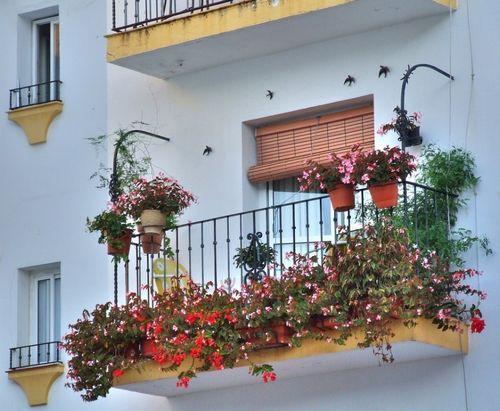 Цветы на балконе: выбор и расположение, дизайн, фото и названия (видео)