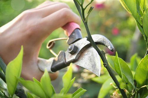 Как правильно обрезать деревья и кустарники.
