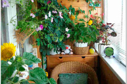 Сад на балконе своими руками (фото дизайнов, видео)